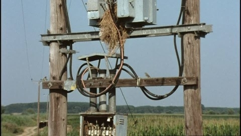 House Sparrow / Nest / Electrical Box / Greece | Hd Stock Video within Fuse Box Electrical Supplies